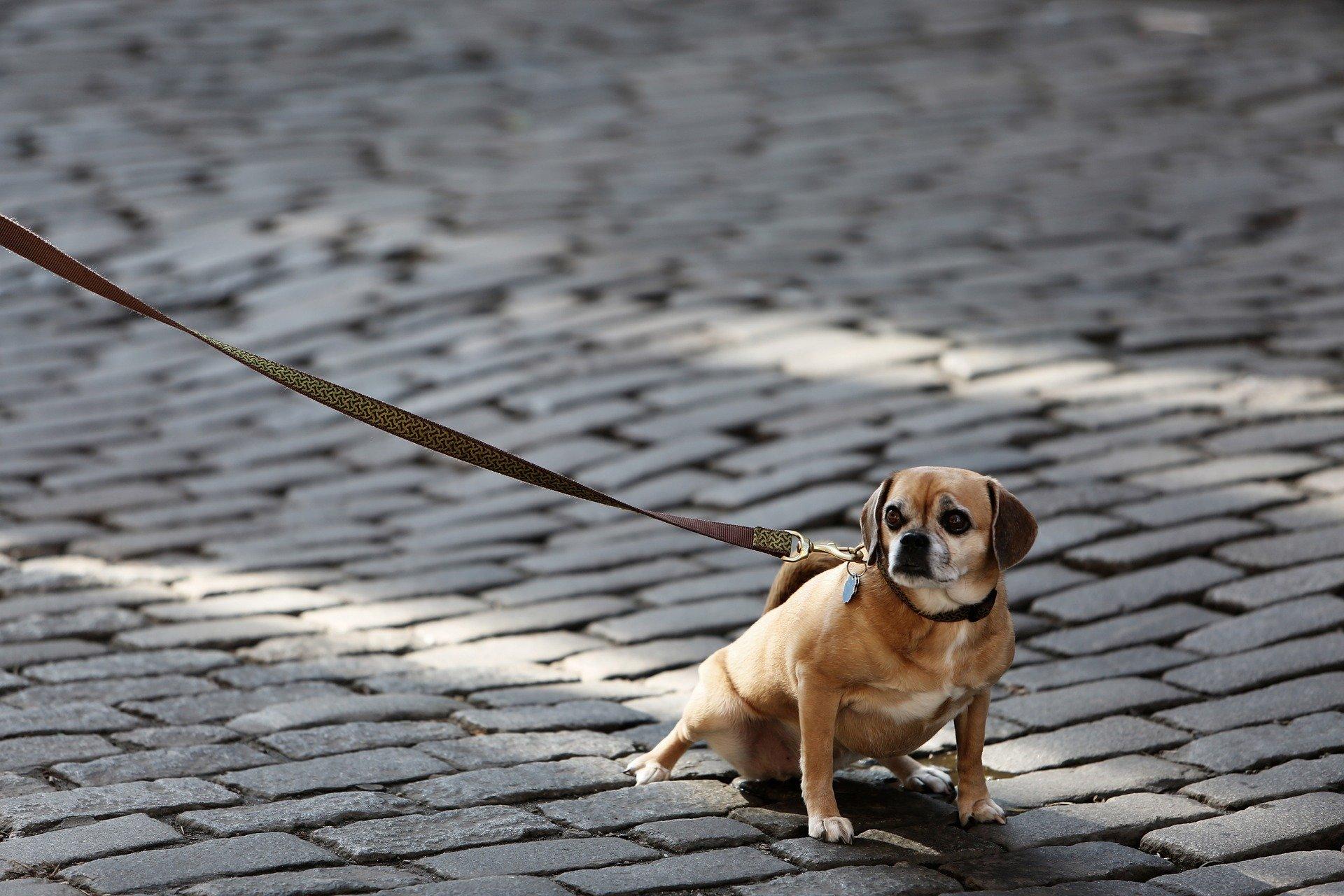 Que faire si votre chien a peur de la laisse ?