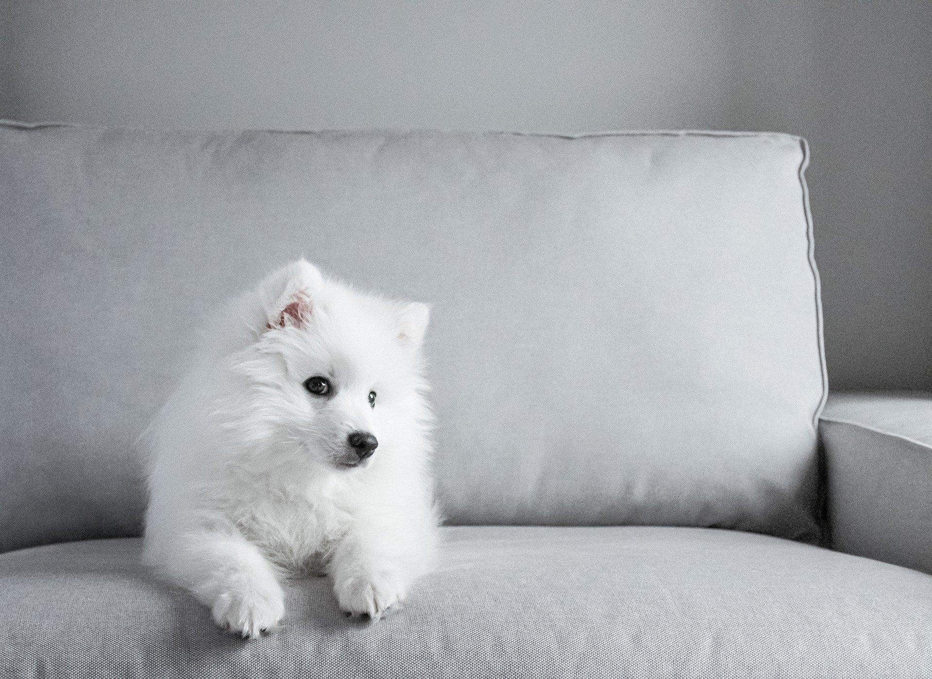 chien ne répond pas à son nom