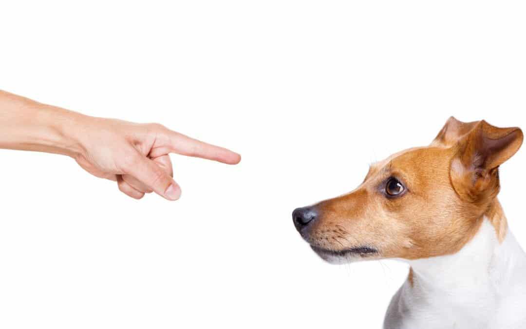 Peut-on éduquer son chien sans crier ?