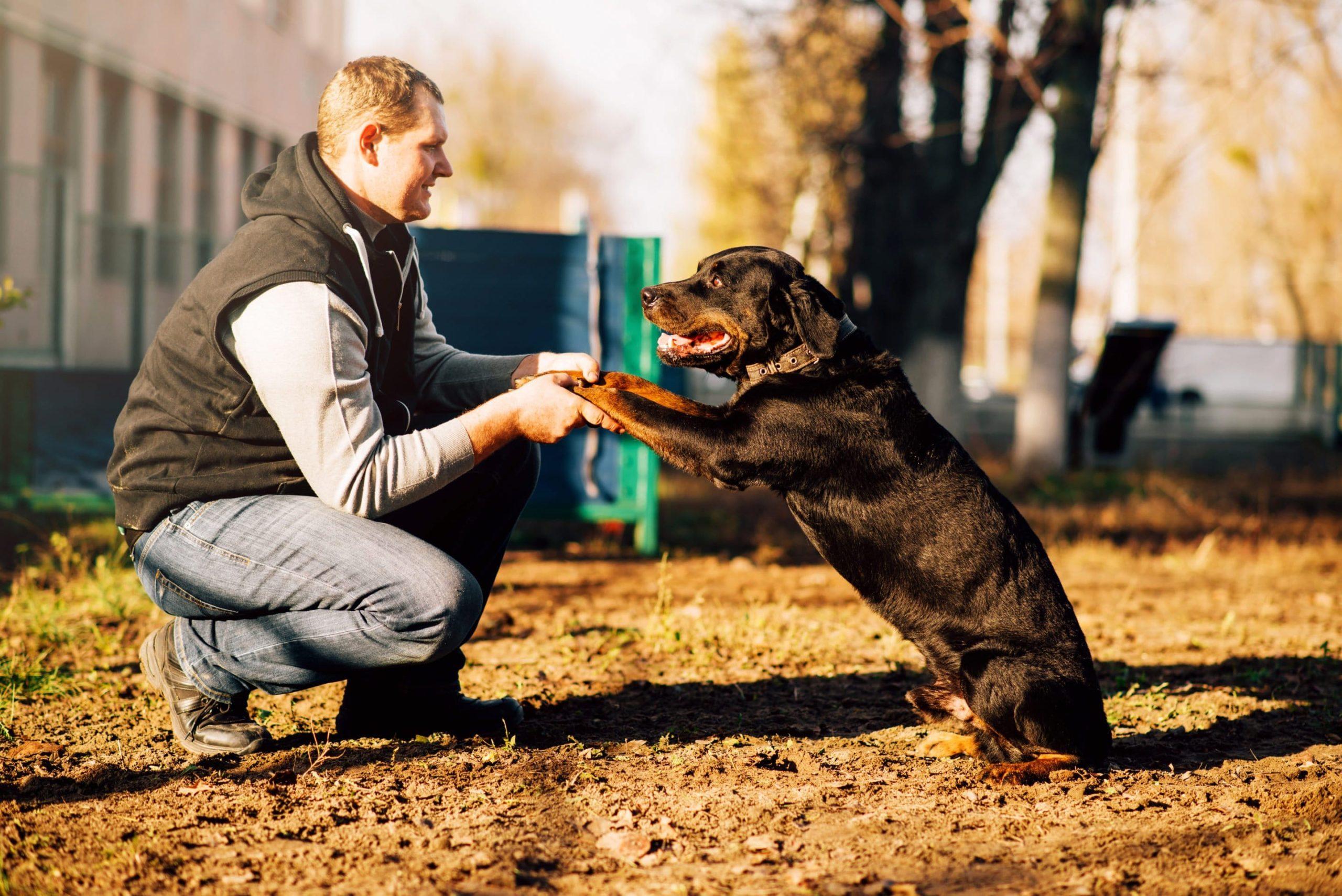 dressage d'un chien âgé