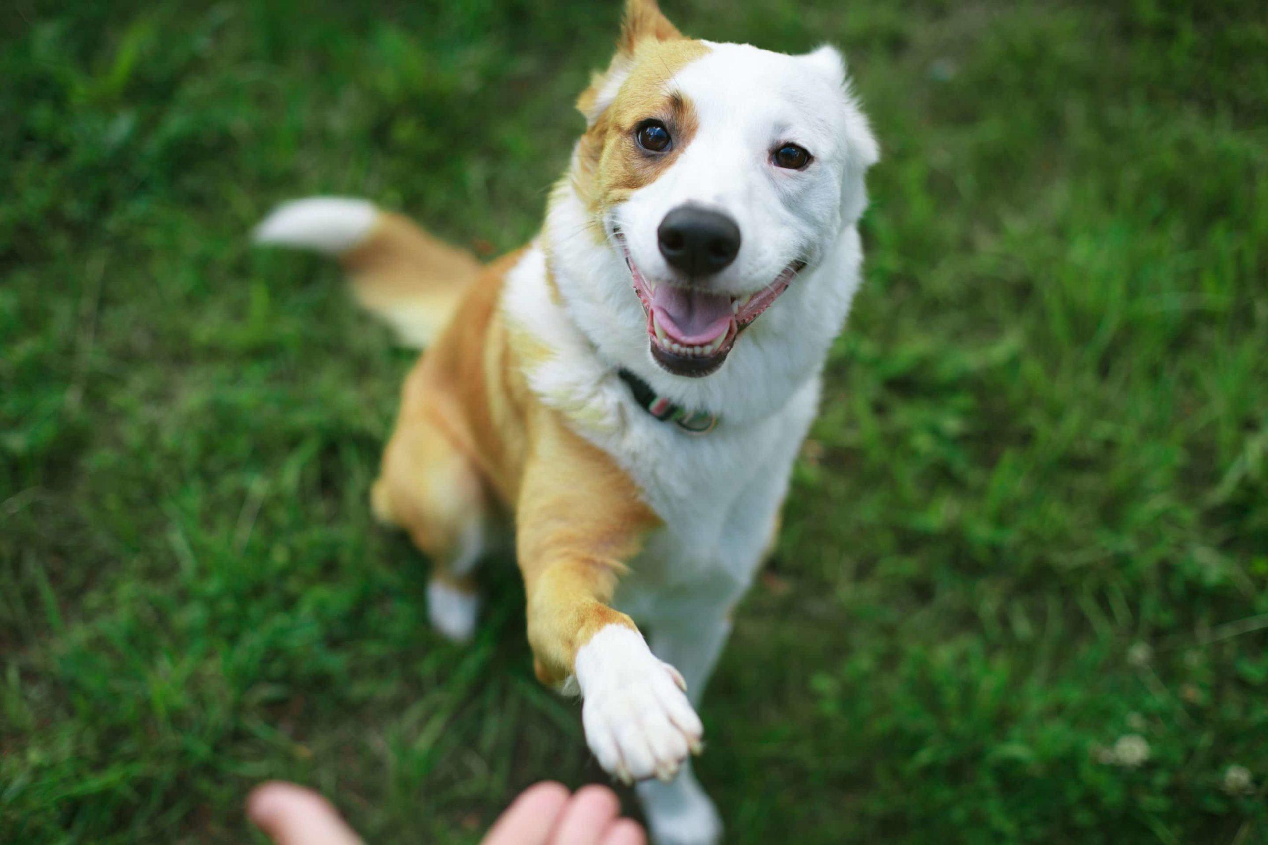 Est-ce facile d'éduquer son chien ?