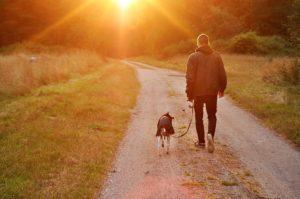 être un bon maître pour son chien