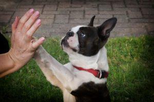 empêcher son chien de réclamer