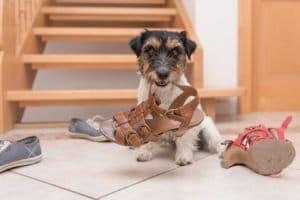 empêcher votre chien de manger des objets