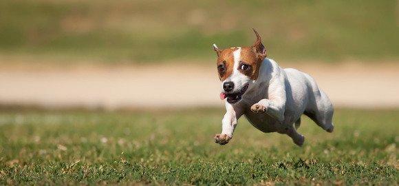 comment apprendre a son chien a revenir au pied