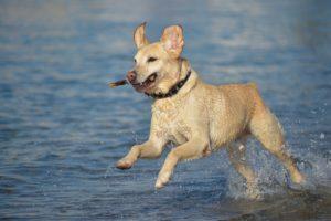 gérer le trop plein d'énergie de votre chien