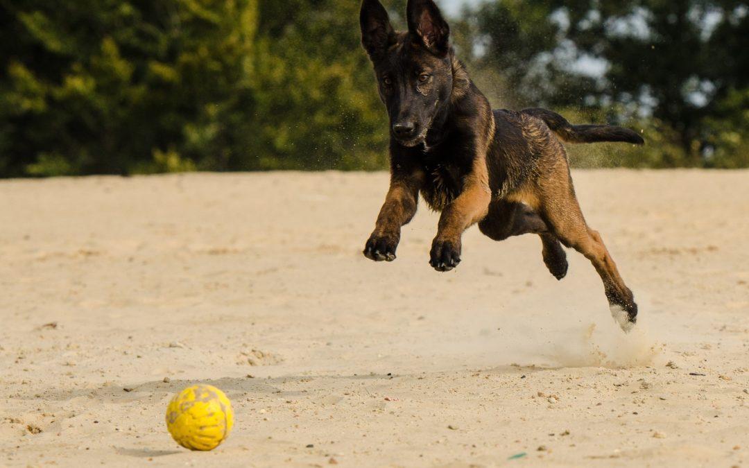 Comment gérer le trop plein d'énergie de votre chien ?
