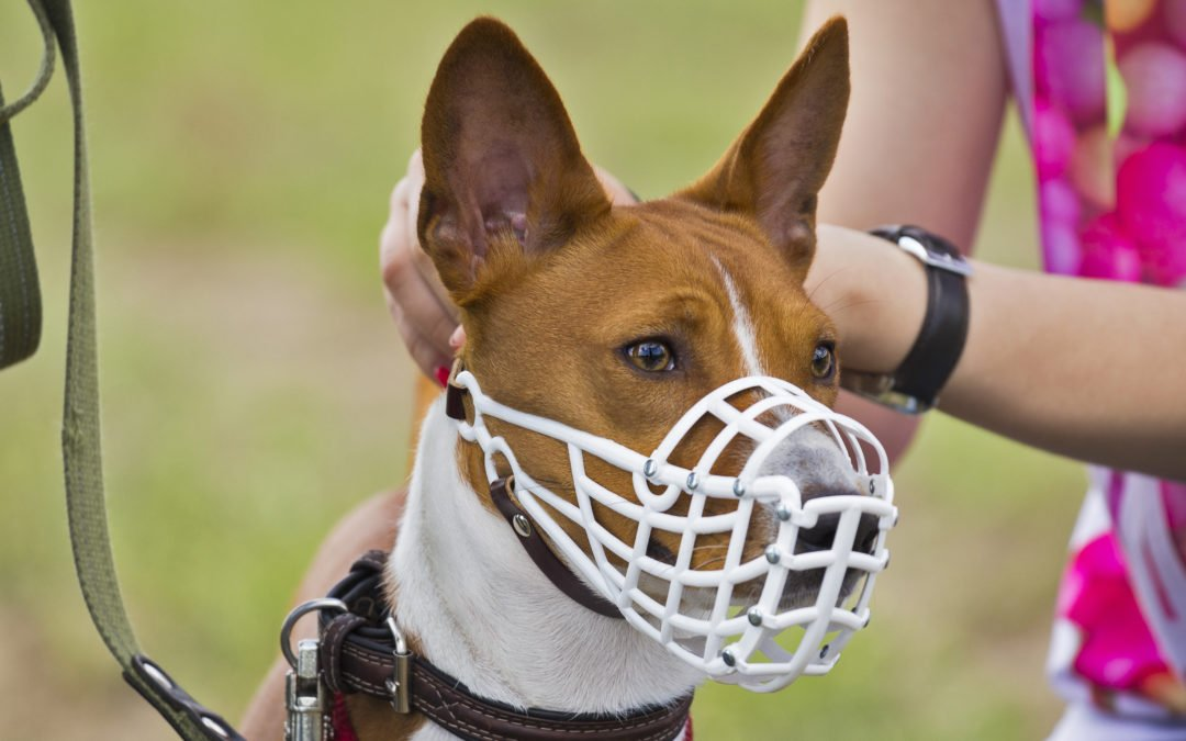 Comment habituer son chien à la muselière ?