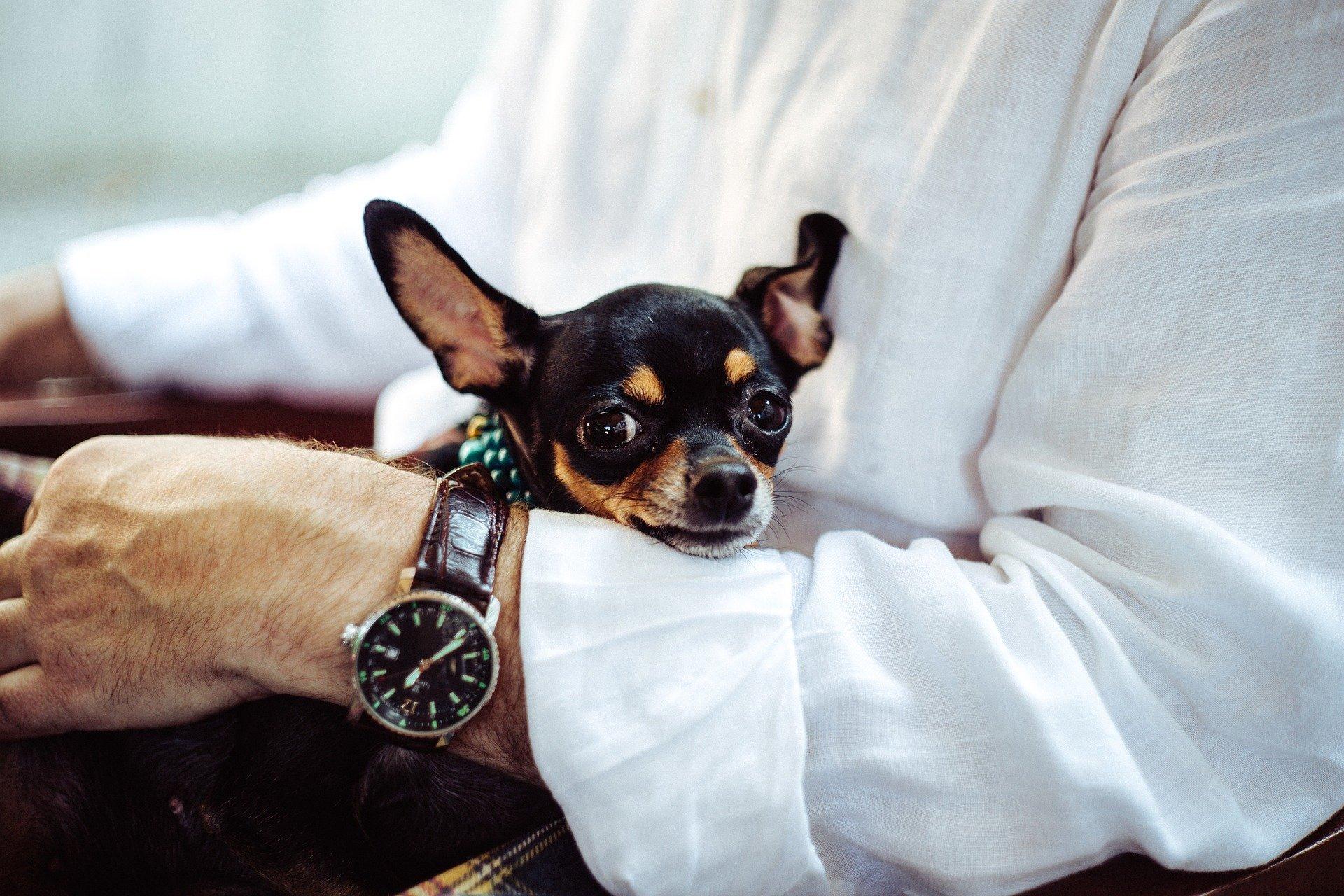 Pourquoi se méfier de l'anthropomorphisme dans la relation «chien-homme» ?