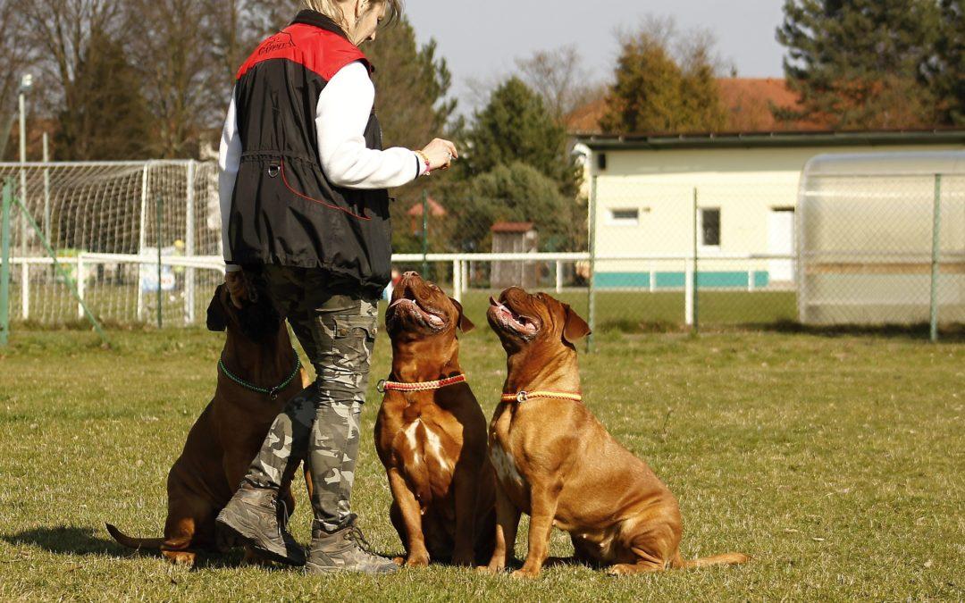 3 erreurs à éviter lors de l'éducation de son chien