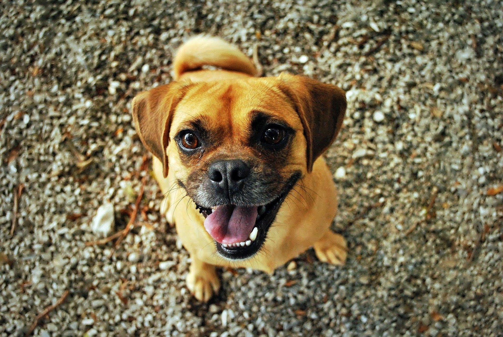 Comprendre les mimiques et expressions de son chien