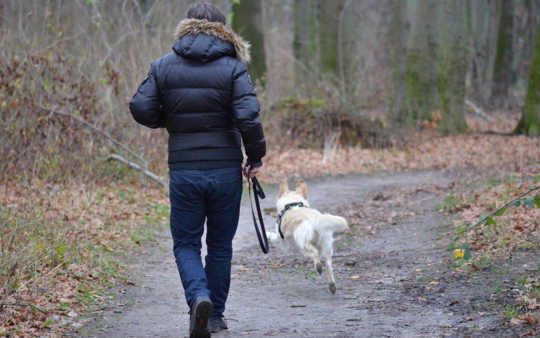 Que faire si mon chien fugue ?