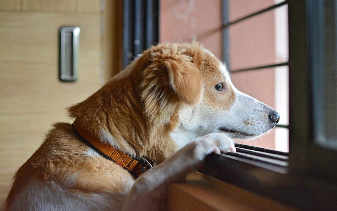 occuper son chien durant vos absences
