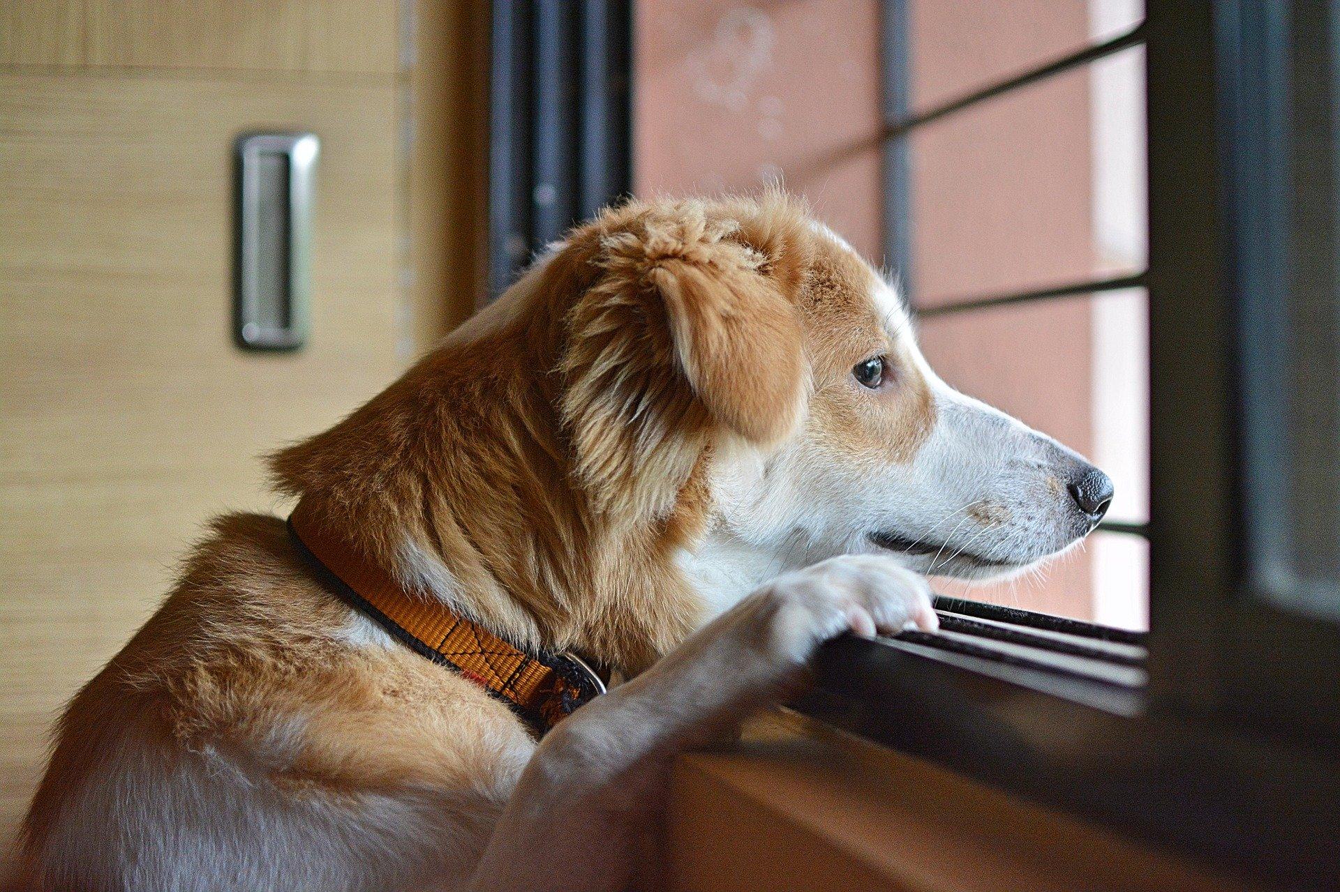 Comment occuper son chien durant vos absences ?