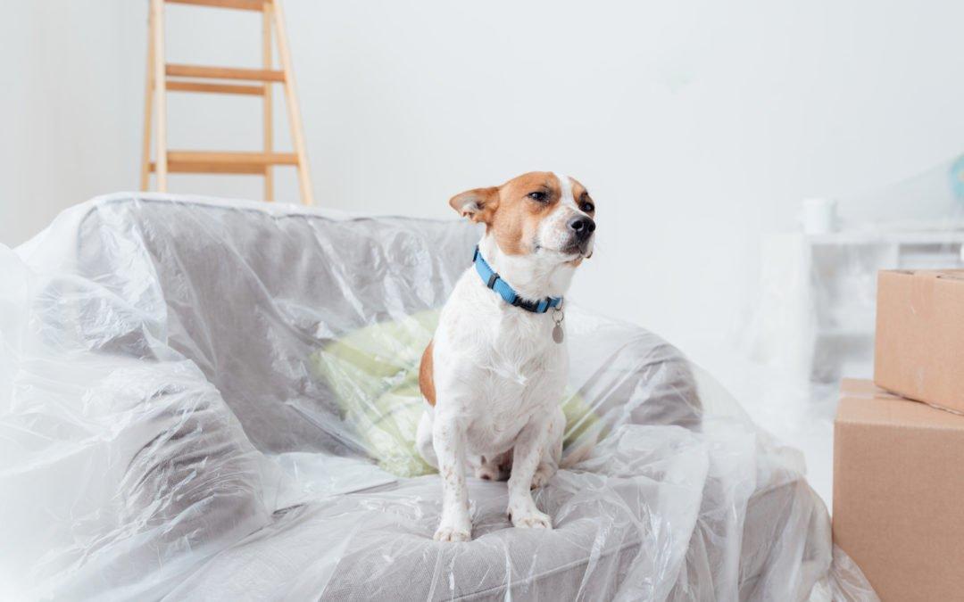 Comment préparer son chien à votre prochain déménagement ?