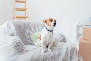 préparer son chien à votre prochain déménagement