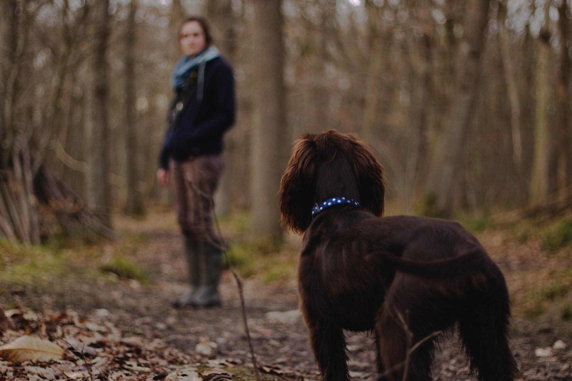 Comment bien promener son chien ?