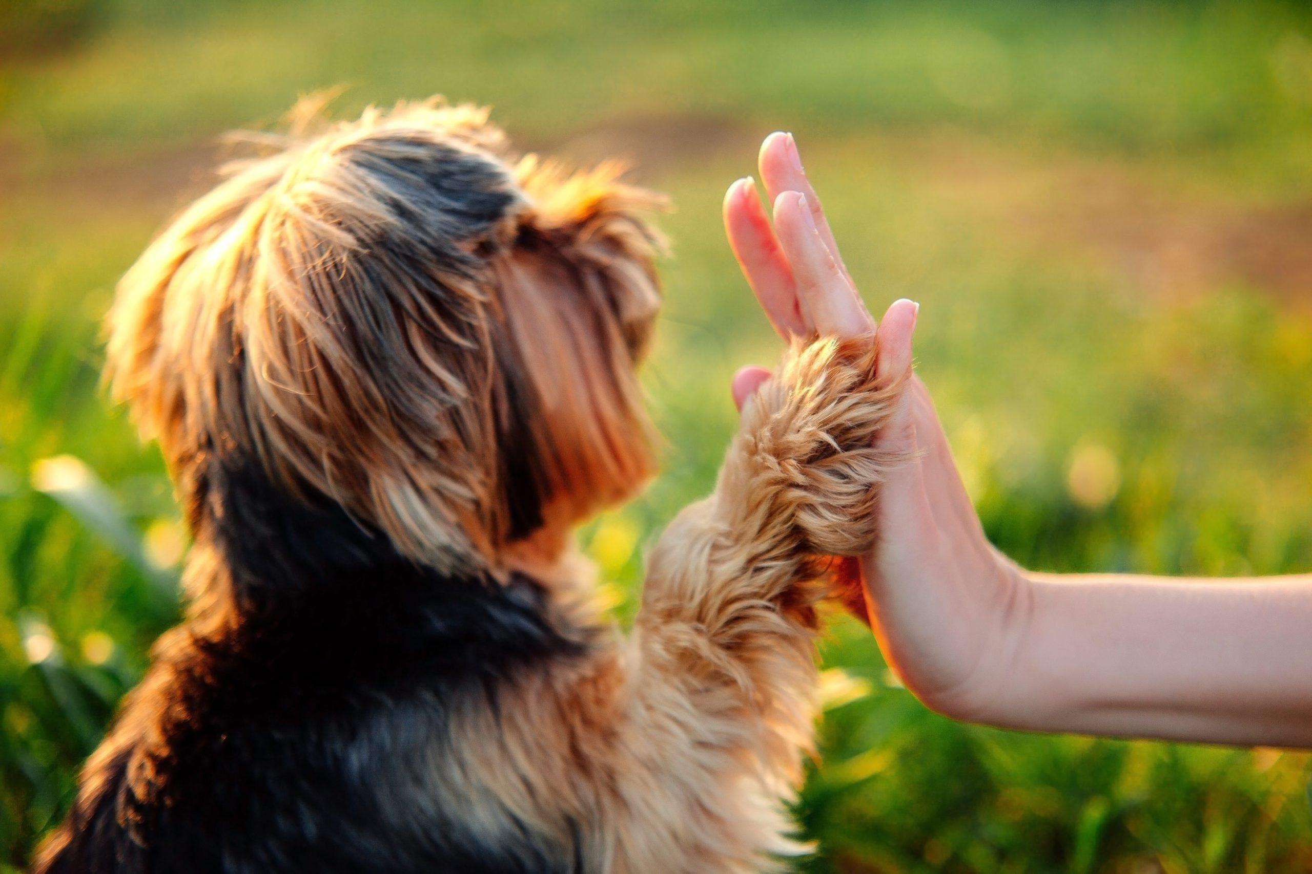 récompenser son chien