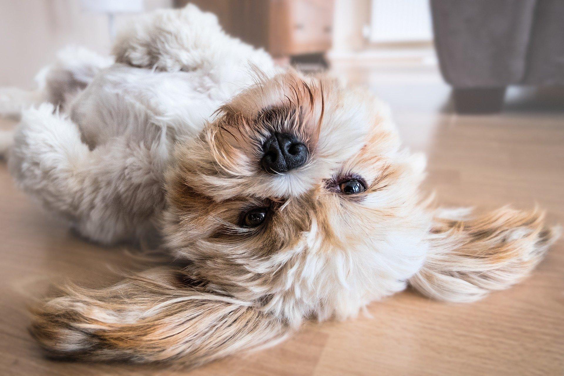sécuriser la maison pour votre chien