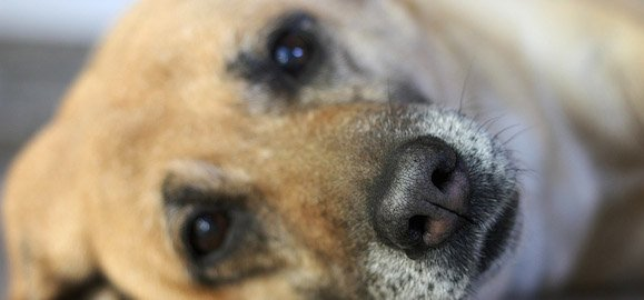 Comment éduquer un chien adulte?