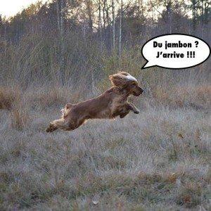 le-rappel-du-chien