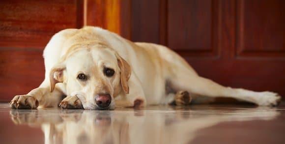 Comment éviter que mon chien s'ennuie ? 2 moyens simples !