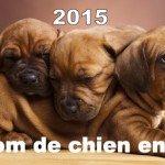 Liste de nom de chien en L – Année 2015 – Prénom de chien