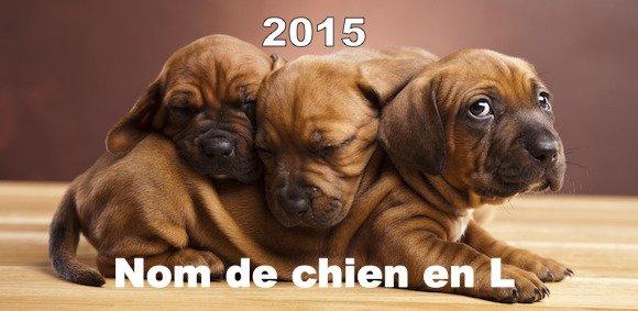nom chien lettre 2015 Liste de nom de chien en L   Année 2015   Prénom de chien nom chien lettre 2015