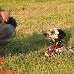 Comment apprendre le «pas bouger» à son chien?