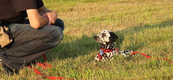 """Comment apprendre le """"pas bouger"""" à son chien?"""