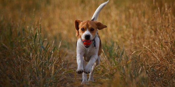 Comment apprendre à rapporter à son chien?