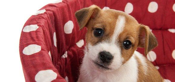 Comment apprendre le « ta place » ou « panier » à son chien ?