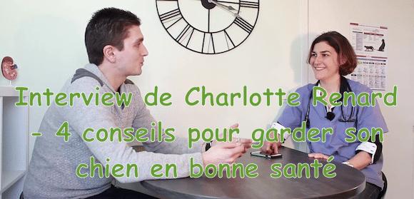 Interview de Charlotte Renard vétérinaire – 4 conseils pour garder son chien en bonne santé