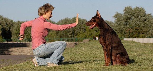 Comment donner un cours d'éducation canine en méthode naturelle ?