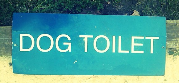 """""""Heureux et Propre"""" La nouvelle façon d'apprendre la propreté à son chien !"""