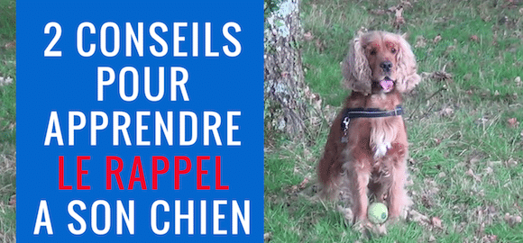 2 conseils pour APPRENDRE le RAPPEL à son chien