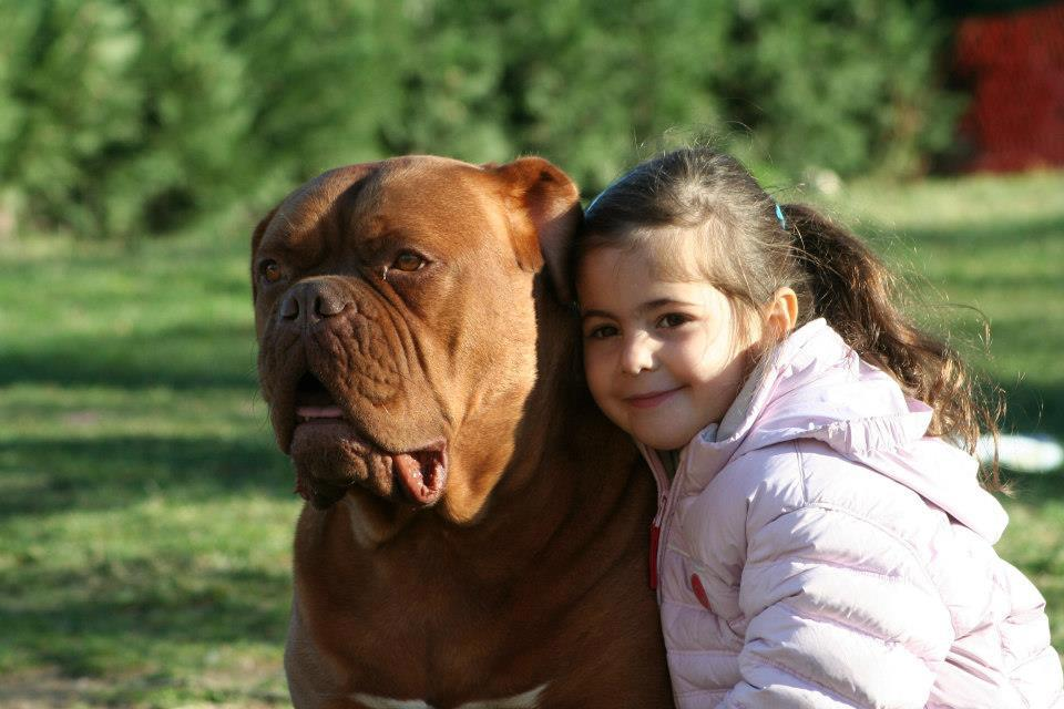 le dogue de bordeaux la force tranquille race de chien. Black Bedroom Furniture Sets. Home Design Ideas