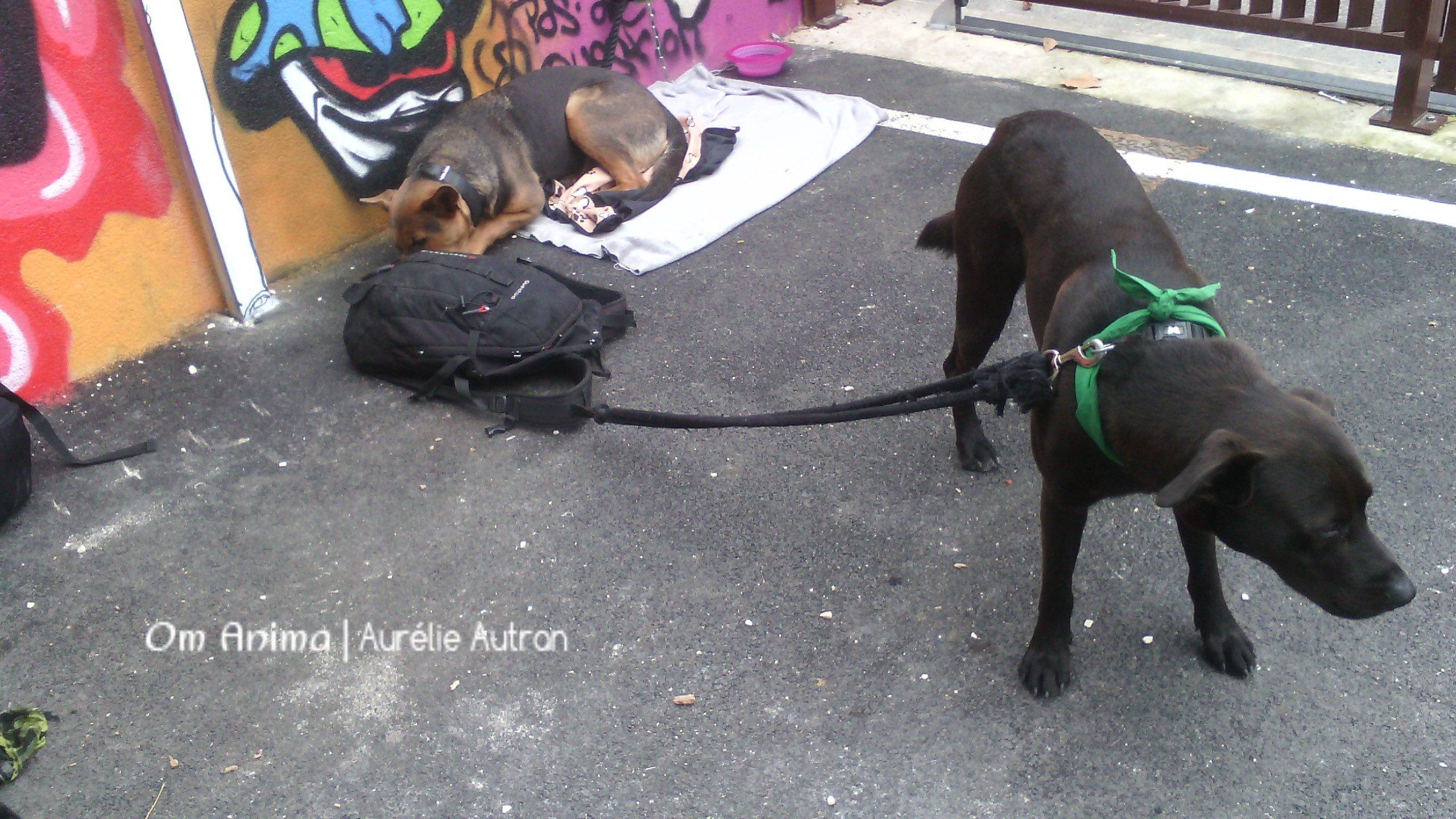 Accueil et gestion du chien