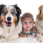 Comment préparer son chien à l'arrivée d'un bébé ?
