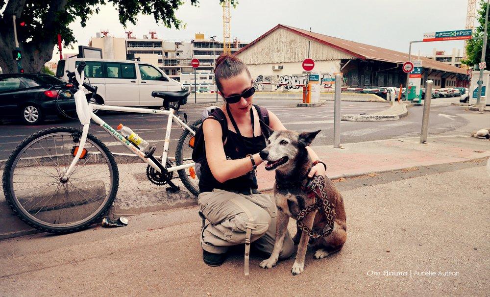 om-anima-mediation-animale-sociale-04