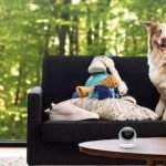 Comment filmer son chien durant votre absence ?