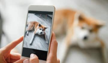 Top 5 des meilleures caméras pour surveiller son chien pendant vos absences