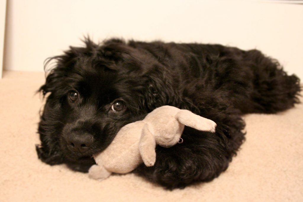 Small Dog Ears