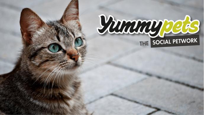Yummypets : Partagez vos expériences animalières