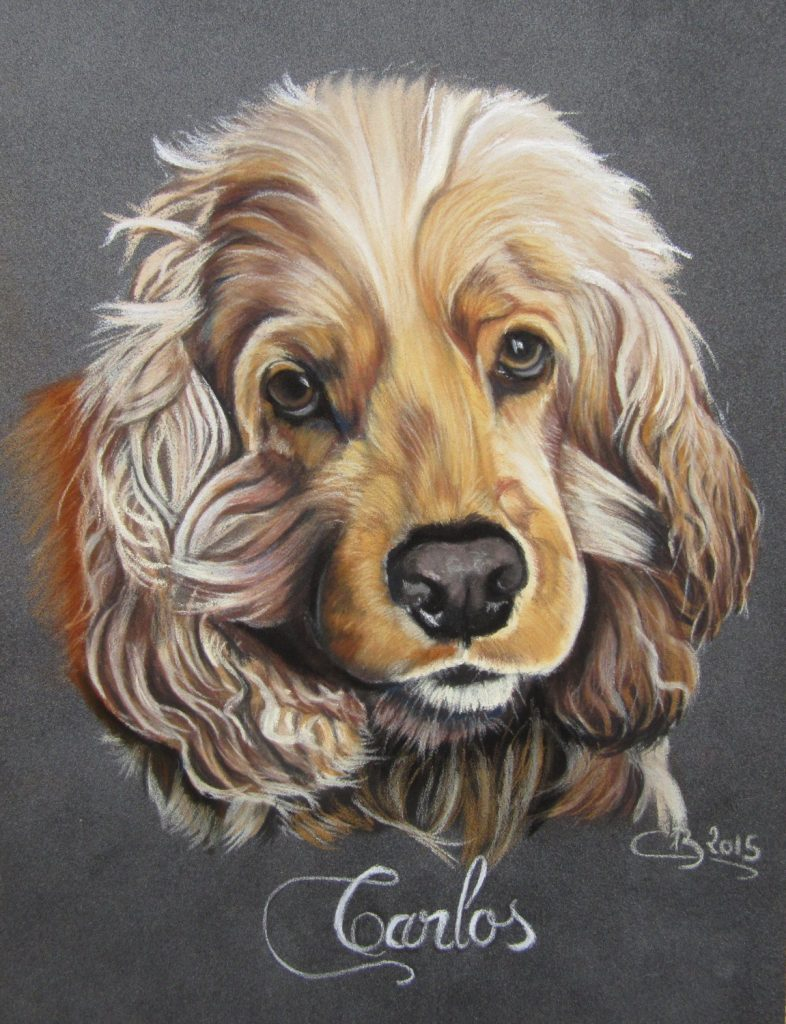 portrait-cocker-spaniel-anglais