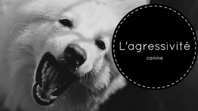 Les différents types d'agression chez le chien