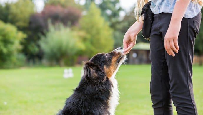 Vermifuge pour chien : comment bien le protéger des parasites ?