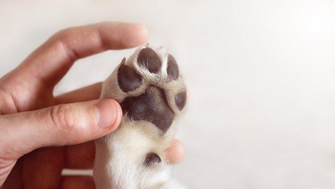 Tiques chez le chien : 5 endroits insoupçonnés ou elles se cachent