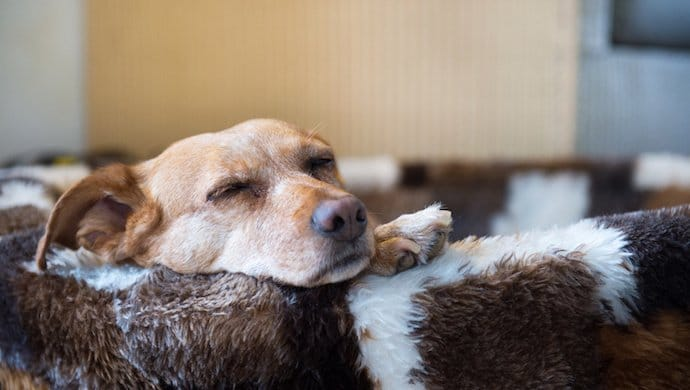 4 choses effrayantes qui vivent dans le panier de votre chien