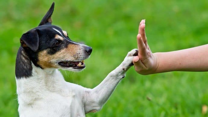 Comment dresser un chien ?